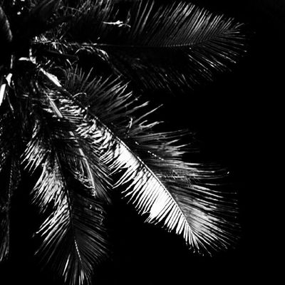 Coco Bw Nightshoot Dark Coconut Tree Leaf Instanesia Photooftheday Instamood Instagramers Instanusantara Pictureoftheday Instagood Bali INDONESIA LangitBaliPhotowork