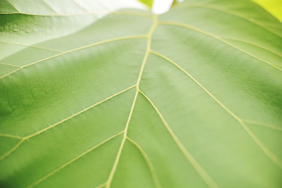 Green Color Nature Leaf Backgrounds Outdoors Big Leafs