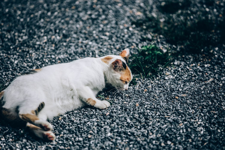 View of a cat lying on road