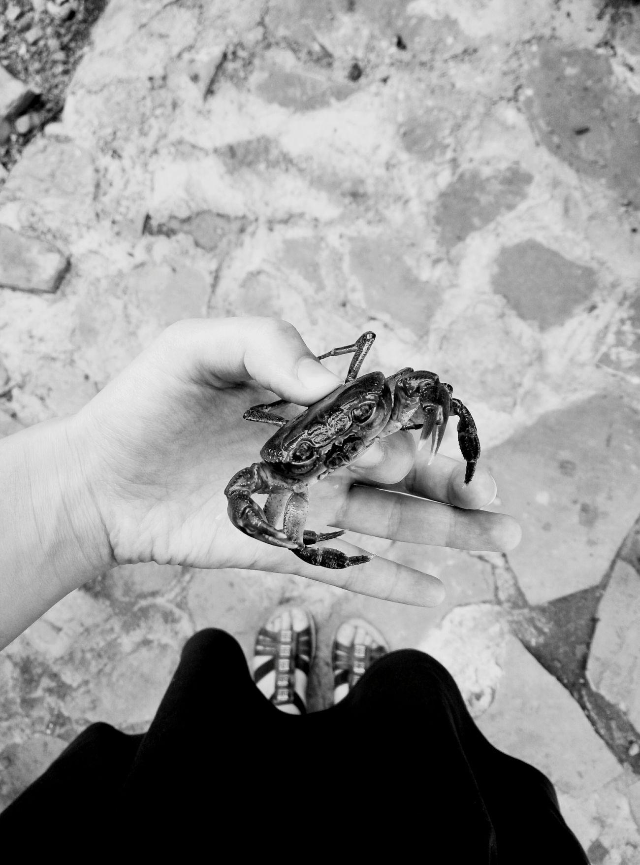 Crabb First
