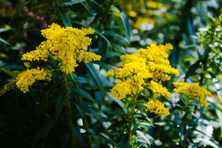 Yellow flowers with leaves