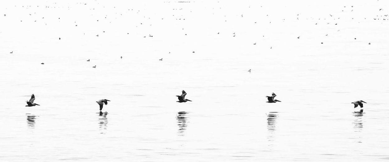 Flock of birds in water