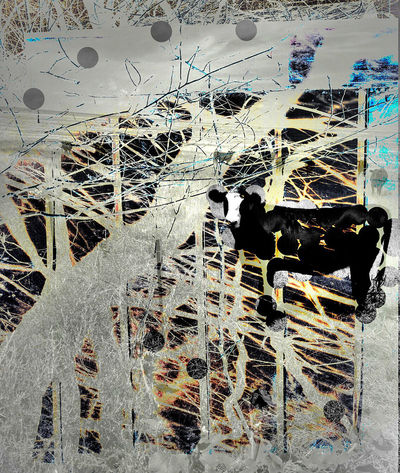 COW Abstract Abstract Art Animal Representation Art Black And White With Color Black Cow White Face Cerulean Blue Cow Creativity Illustration Orange Yellow Rural Textured  Trees Trees In Negative