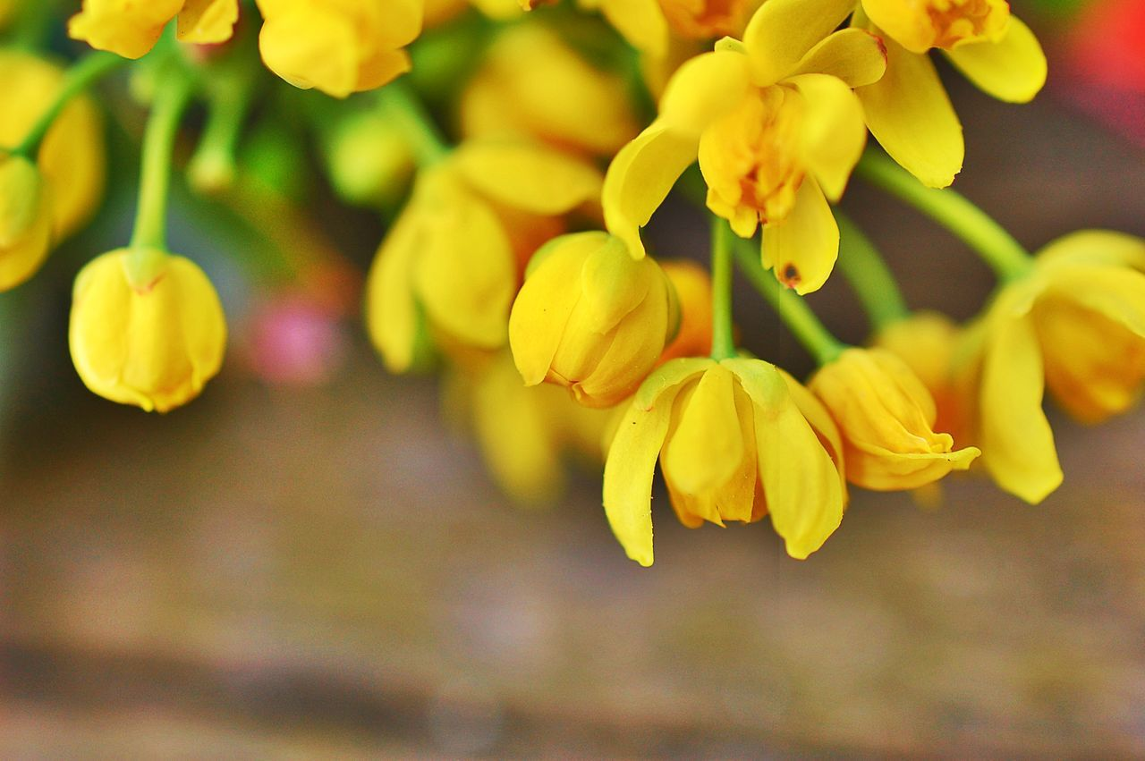 nature, growth, beauty in nature, yellow, flower, freshness, fragility, plant, no people, outdoors, close-up, springtime, day, tree, flower head