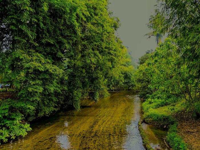 upstream Tree