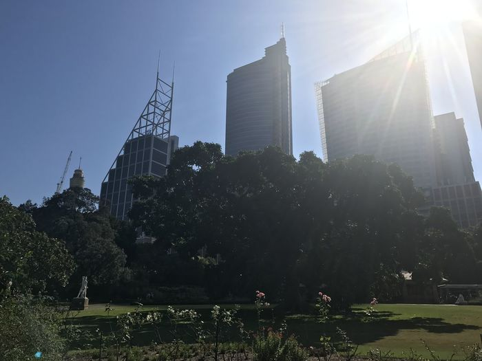 Sydney, Australia, 27th January, 2017, Sunshine city and nature Architecture Australia Beautiful Blue Blue Sky Botanic Garden Botanical Botanical Garden Botanical Gardens City Day Garden Nature Outdoors Sun Sun Light Sun Light Through Trees Sunlight Tree Trees