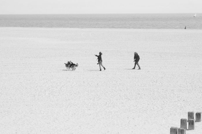 Dogs Play Nature Real People Sea Outdoors Men Leisure Activity Two People Beach Lifestyles Togetherness Day Full Length Horizon Over Water Water Scenics Beauty In Nature Friendship Sky People Dogs Dogs Playing Together Dogs Playing  Dogs Playing At The Beach EyeEmNewHere Minimalism
