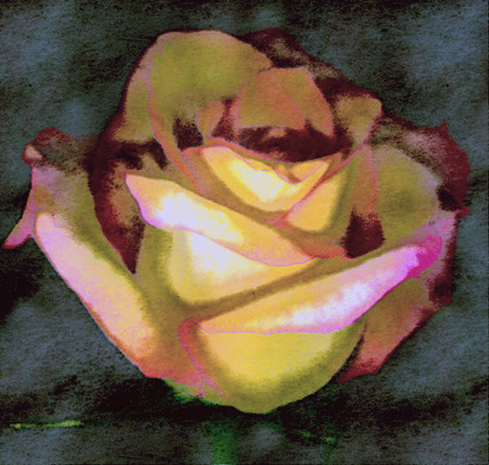 Scanned Rose Watercolor Verde; Digital photogram graphically manipulated to watercolor appearance. Abstract Photography Abstractart Clever Conceptual Art Conceptual Photography  Digital Color Imaging Digital Photogram, Ingenious Photo Realism
