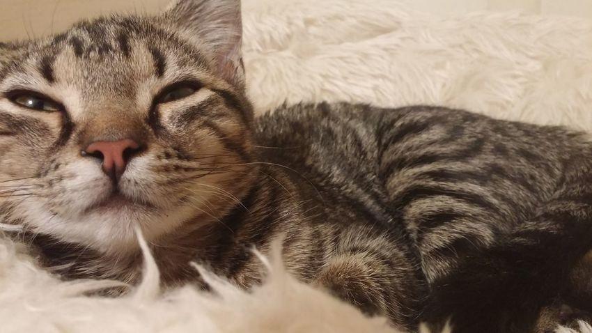 Cat Kitten Sleepy Cute Cute Pets Happy Love Pretty No Filter Catsofinstagram Kittensofinstagram Kitten 🐱 Cat♡