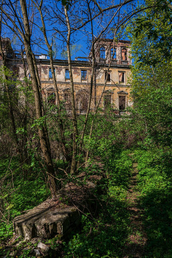 Ruins of the Palace in Slawikowo in Poland Ruins Ruins Architecture Palace Slawikowo Poland Silesia Gutshaus Slawikau Tree Architecture Plant Built Structure Building Exterior Building No People Nature Day Forest Land Growth Outdoors History Green Color Sky Old The Past House Trunk WoodLand