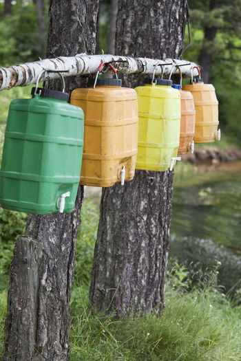 Colorful containers hanging on tree trunks in forest