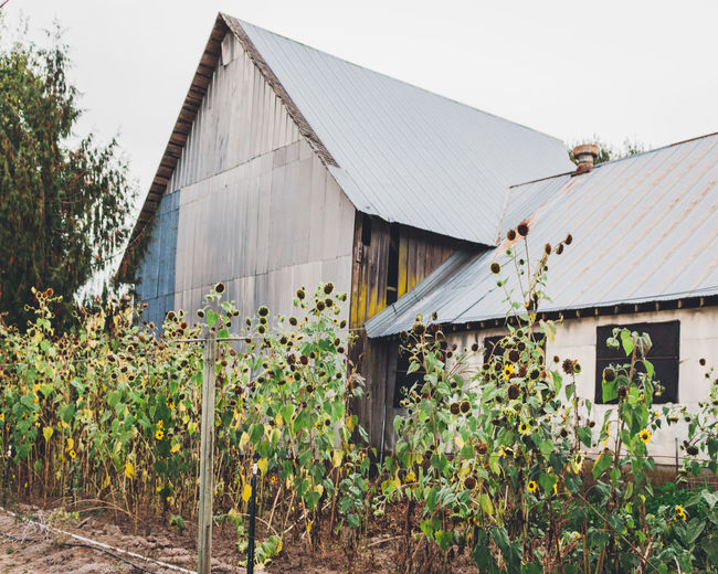 Building Exterior Farm Life Fixer-upper Metal Barn Nature Rust Sun Working Farm