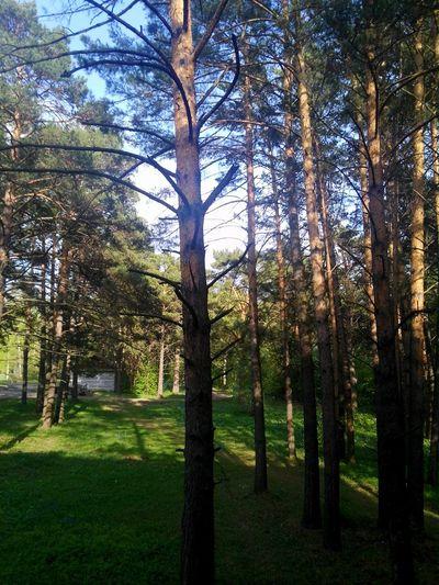 First Eyeem Photo EyeEm Nature Lover Nurture  Природа Siberia
