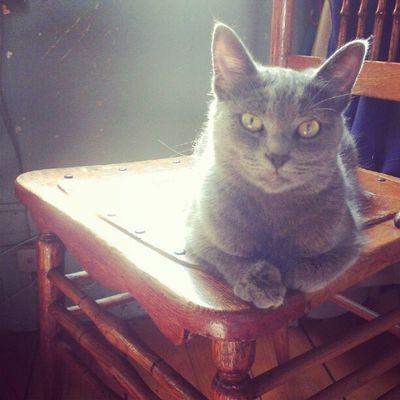 Cleo Kitty Cat Sunlight Kitten Graycat Gray Nostalgia Cozy Instahub Cute Adorable Love