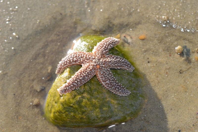 High angle view of starfish on beach