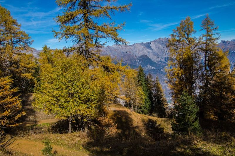 col of lien,valais,swiss Plant Tree Autumn Beauty In Nature Mountain Tranquil Scene Tranquility Scenics - Nature Land Sky Nature Landscape No People Day Non-urban Scene Environment Growth Change Sunlight Outdoors Coniferous Tree