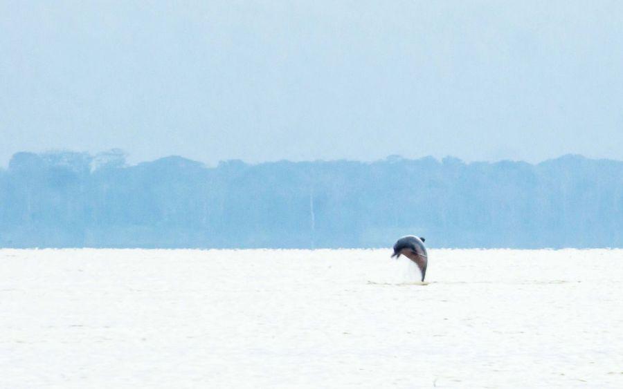 One Animal Tranquil Scene Tranquility Animal Themes Nature Non-urban Scene Beauty In Nature Scenics Remote Solitude Outdoors Escapism Day Dolphin Amazon Amazonas Rio Amazonas Puerto Nariño Rio Tarapoto