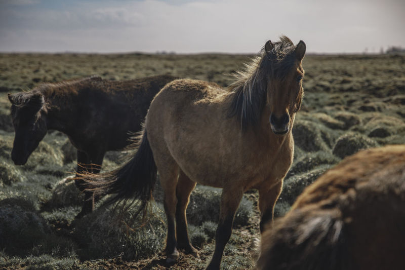 Horses in Iceland Iceland Исландия Waterfall Nature Travel Family Travels