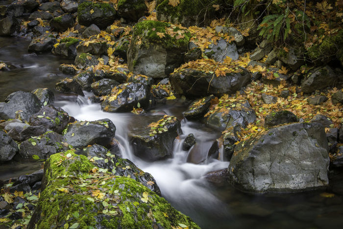 Autumn in Olympic National PArk Autumn, Background, Beauty, Bench, Big, Brown, Color, Colorful, Empty, Fall, Foliage, Forest, Green, Landscape, Leaf, Leaves, Light, Natural, Nature, Orange, Outdoor, Outdoors, Path, Plant, Rays, Red, Scenery, Scenic, Season, Seat, Silence, Sunlight, Tall Long Exposure Mountain Stream, Mountain Creek Water Waterfall