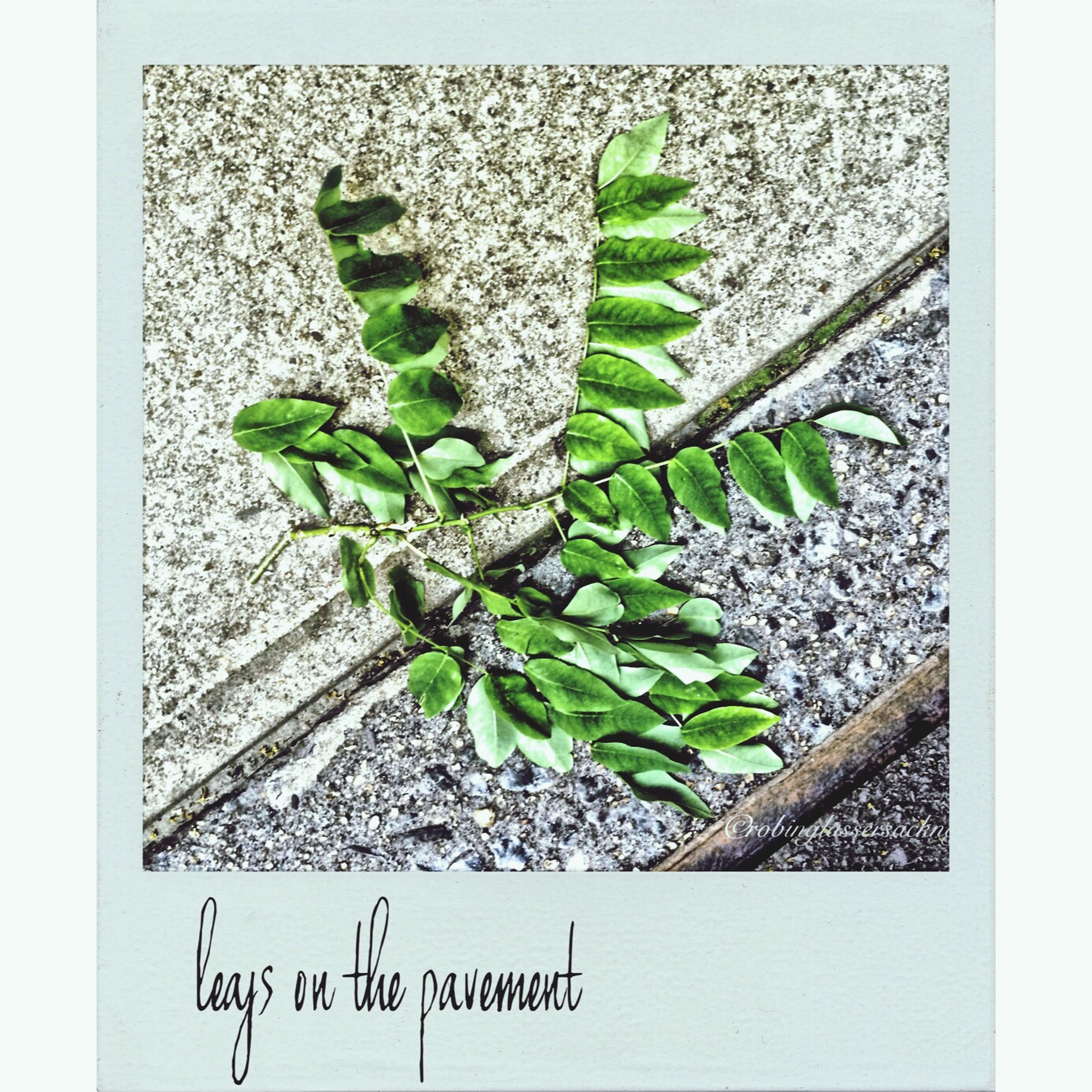 leaf, plant, green color, growth, transfer print, close-up, auto post production filter, nature, green, wall - building feature, day, high angle view, growing, no people, ivy, outdoors, wall, potted plant, text, sunlight