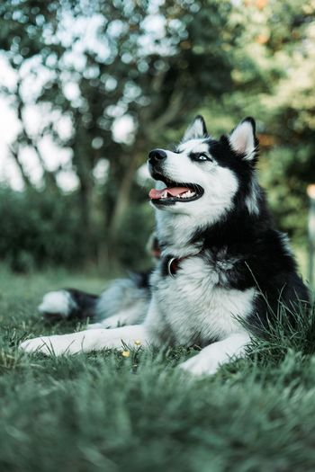 Dog looking away on grass against trees