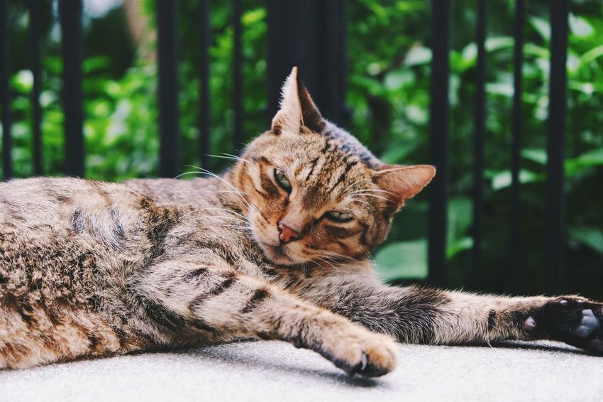 Lazy cat on a Sunday afternoon Snapshot Photooftheday Photography Cozy Cat Cats Animal Themes One Animal Domestic Cat Lying Down Relaxation Mammal Feline Day Close-up Nature Outdoors Portrait Pets