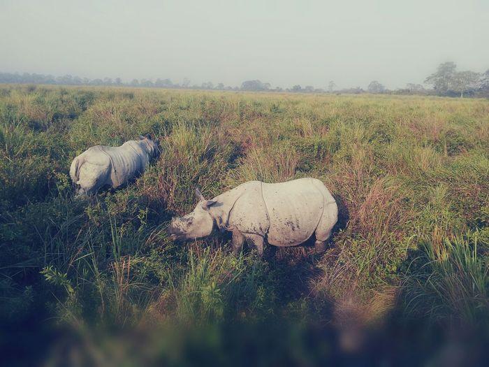 Wildlife Nature Photography Kaziranga