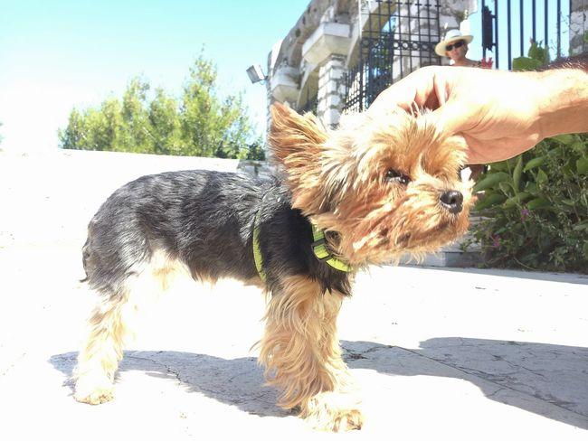 Dog Love Dog VSCO