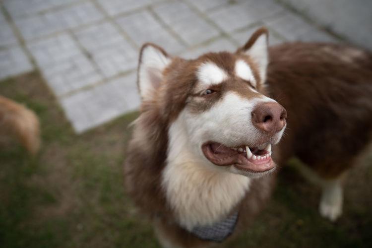 Dog Face One