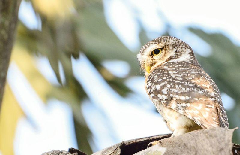 Don't disturb me! ! Owl, Nature