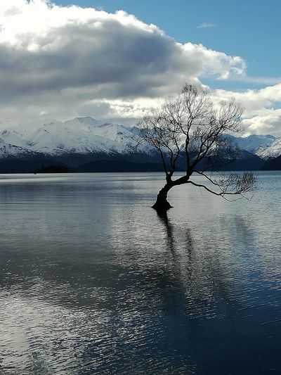 Ice Nature Bare Tree Beauty In Nature Branch Cloud - Sky Day Famous Place Lake Landmark Landscape Lone Mountain Mountain Range Nature Outdoors Scenics Sky Tranquil Scene Tranquility Tree Wanaka Tree Water Waterfront Winter