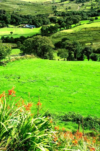 Color Palette Nature Green Green Grass Nature Photography Ring Of Kerry Ireland Ireland Landscapes Summer Flowers Trees