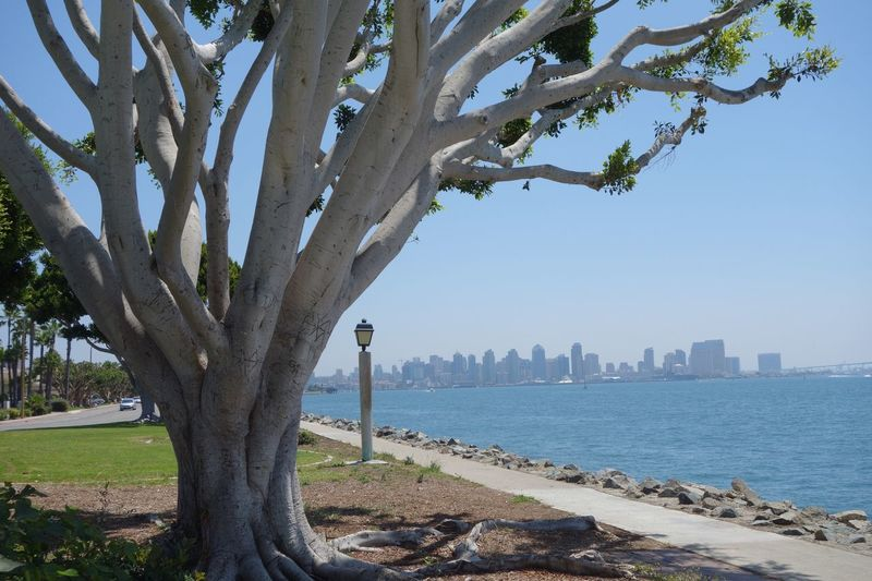 Skyline California San Diego Ca Tree Plant Water Built Structure City Building Exterior Nature Sky Sea Architecture