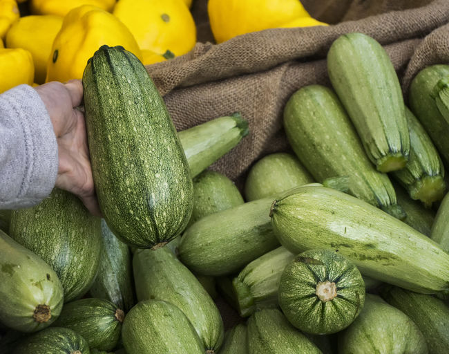 Cousa squash (similar to zucchini ) Agriculture Cousa Cousa Squash Cucurbita Pepo Summer Squash Vegetables & Fruits Vegetarian Food Zucchini Farm Stand Farmer's Market Food Food And Drink Freshness Green Color Healthy Eating Produce Ripe Salad Vegetable Squash Vegetable
