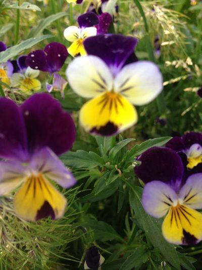 Flower Flowering Plant Plant Freshness Fragility Vulnerability  Petal