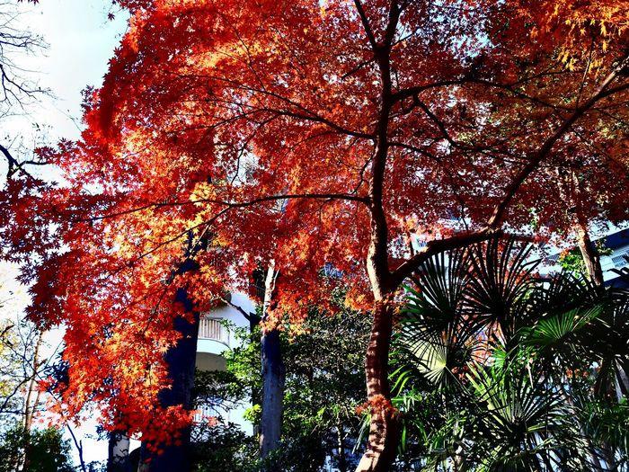 EyeEm Japan EyeEm Nature Lover Japanese Garden Hugging A Tree