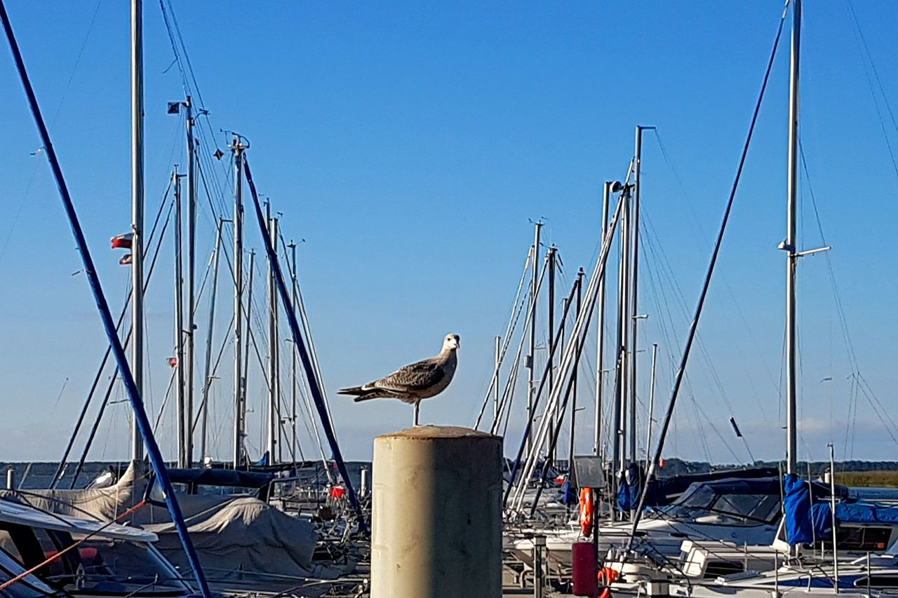 animal themes, animals in the wild, bird, animal wildlife, one animal, day, outdoors, perching, mode of transport, nature, no people, nautical vessel, transportation, clear sky, sea, seagull, mast, sky