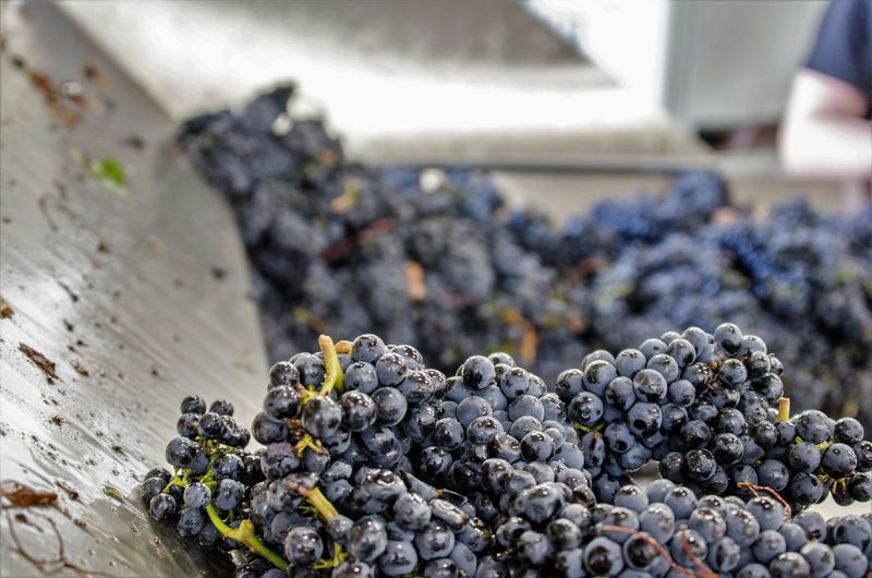 Blackberry Blueberry Bunch Close-up Day Food Food And Drink Freshness Fruit Grape Grapes Harvest Harvest Time Healthy Eating Nature No People Outdoors Ripe
