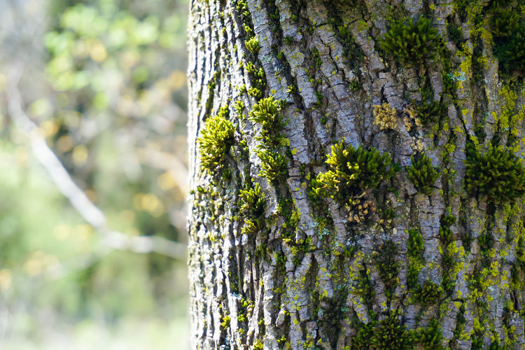 Close-up on a tree trunk with musk in Spring Beauty In Nature Close-up Freshness Garden Garden Photography Green Color Growth Musk Nature No People Outdoors Park Plant Spring Springtime Tree Tree Trunk Trunk