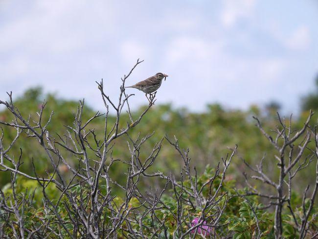 Bird Animal Wildlife Nature EyeEmNewHere Beauty In Nature