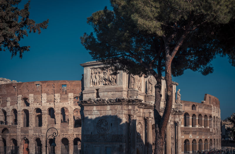 View to the Colloseum in Rome Architecture Built Structure History The Past Tree Building Exterior Ancient Travel Destinations Sky Nature Travel Plant Old Ruin Tourism Old Building Ancient Civilization Day Outdoors Archaeology Rome Italy Colloseum Lazio Roman