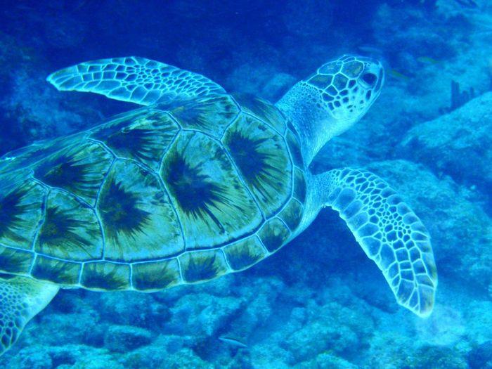 dude Tortoise