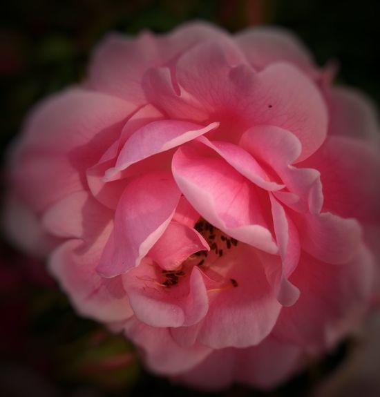 Fleurs Nature Nord