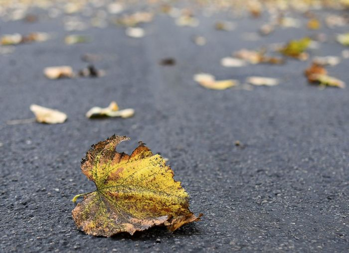 Close-up of dry leaves on road