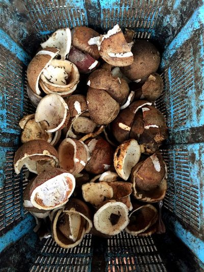 Coconut sells