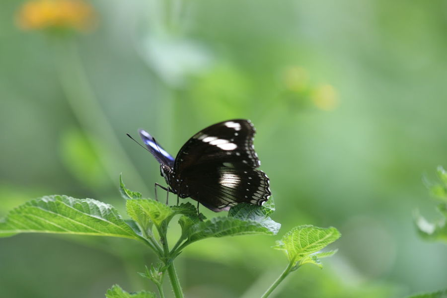 Animal Themes Animal Wildlife Beauty Butterfly Butterfly - Insect Nature No People Outdoors