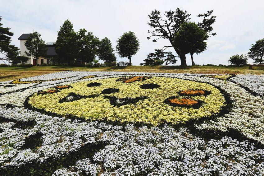 加美町のゆるキャラ、カミーゴ。 Eos6d Ef20mmf2.8 Flower Flower Photography Flowers