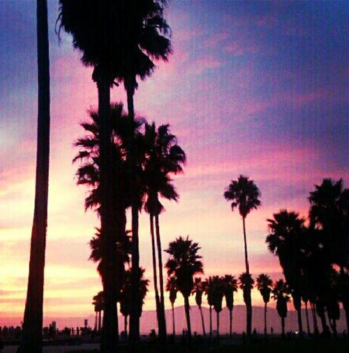 Venice Beach La Sky_collection Sunset