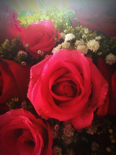 Rosas 💐