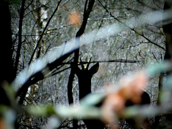 I think I've just been spotted. Tree Nature Outdoors Forest Deer Wildlife Wildlife Siloutte Deer Siloutte Deer Sighting Deer Hunting Dark Dark Forest